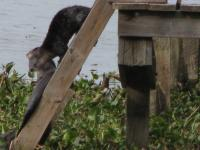 Looking for fish in the fish basket